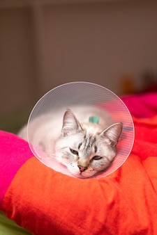 Pet care concept sleepy cat wearing elizabethan collar, e-collar or buster collar with copy space