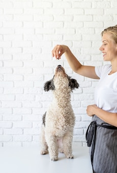 Pet care. young smiling woman giving her dog a snack