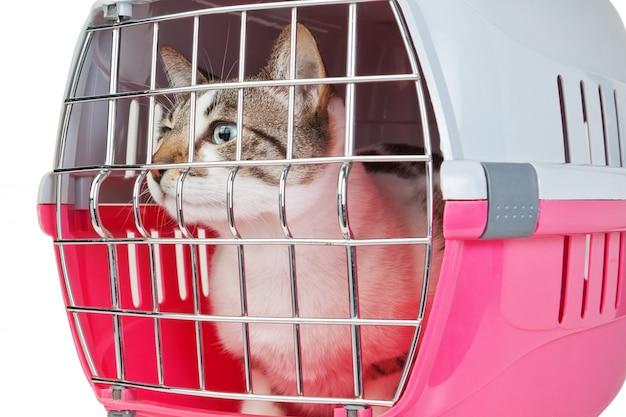 Домашняя кошка в ловушке в клетке для ветеринара.
