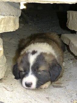 Animale domestico animale carino cucciolo di cane assonnato stanco giovane