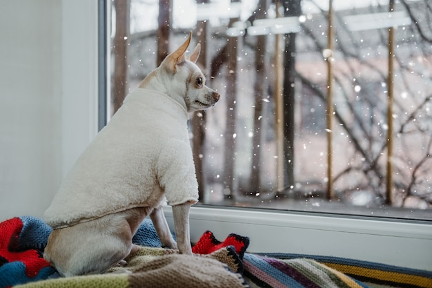애완 동물 패션 애지중지 애완 동물 개 옷 개 강아지 의류 액세서리 custume 귀여운 장난감 테리어