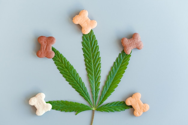 Pet food containing cbd cannabis,