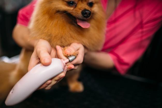 ペットグルーマーは、グルーミングサロンで犬の爪を掃除します。家畜のためのプロの新郎と髪型