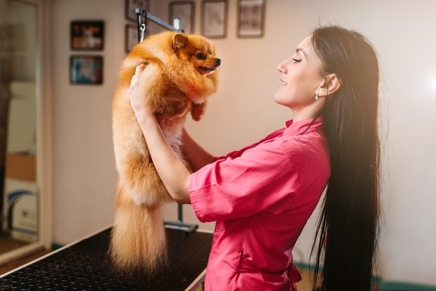 Pet groomer holds funny dog in hands, grooming salon, cleaning service. professional groom and hairstyle for domestic animals
