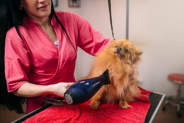 ヘアドライヤー付きのペットグルーマー、グルーミングサロンでの犬の洗浄。家畜のためのプロの新郎と髪型