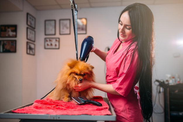 Pet groomer with hair dryer, dog in grooming salon