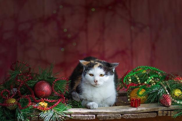 クリスマスツリーのある部屋でペット