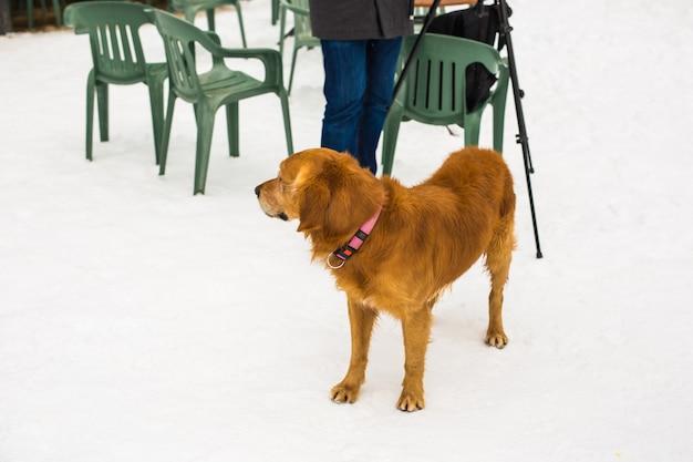 애완동물 주인, 개, 그리고 사람 개념 - 겨울에 웃고 있는 젊은 백인 남자와 개.