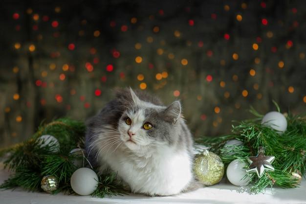 ペットはクリスマスのおもちゃで遊ぶ。ペットとの休日やお祝い。クリスマスツリーのある部屋でペット