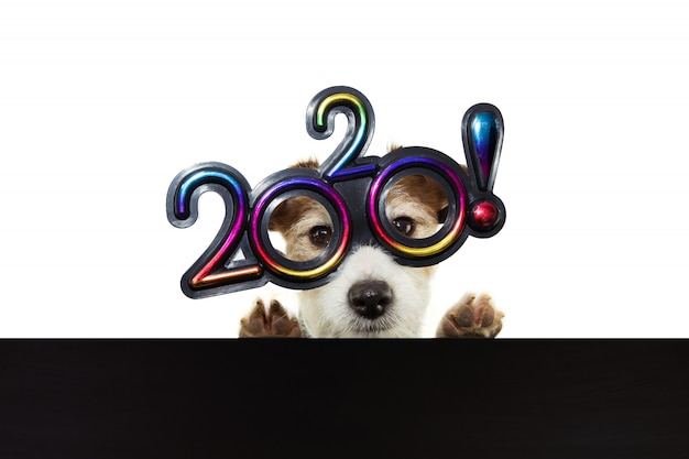 Pet puppy dog celebrating new year 2020 with text glasses