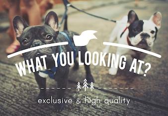 Pet Saying Text Concept