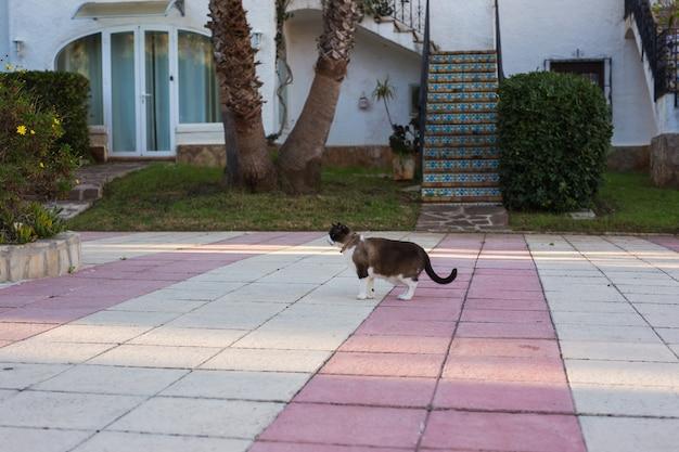 Концепция домашних животных, весны и животных. милый кот гуляет на открытом воздухе