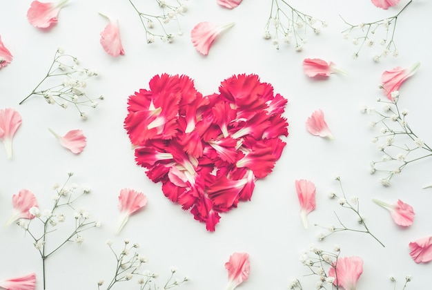 Лепесток цветка на белом фоне