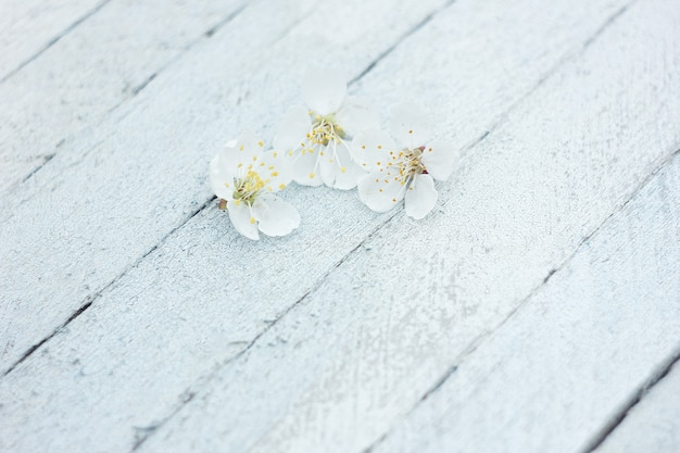 Petals of cherry flowers on a light wooden background, spring background
