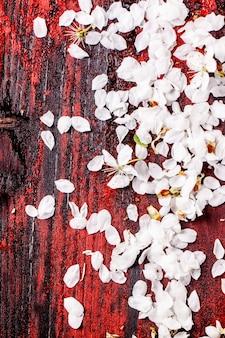 Petals of cherry tree