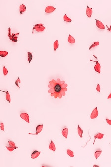 Petals on pink table
