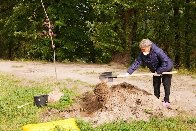러시아 상트페테르부르크, 2020년 9월: 작업복을 입은 사람들이 땅에 삽으로 나무 묘목을 심고 있습니다. 영토의 젠트리피케이션. 조경, 자연, 환경 및 생태학의 개념. 사이트 복사 공간
