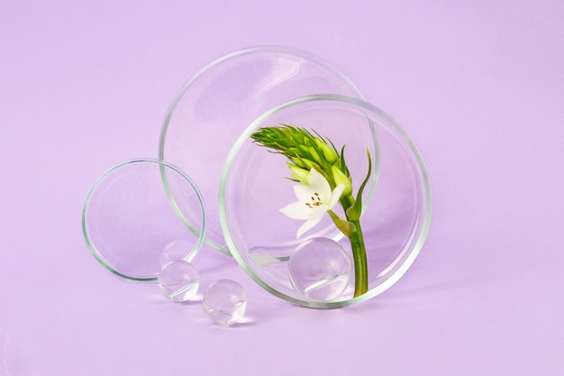 紫色の背景に花の枝が入ったペトリ皿。近くにガラス玉。研究のコンセプトと化粧品の作成。