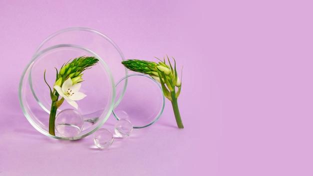 紫色の背景にとどまるペトリ皿とその近くの花の枝ガラスのボール