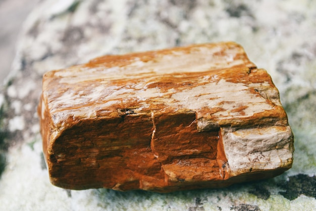 Petrified wood fossil, the old wood becomes stone by natural