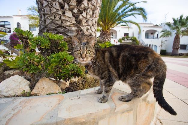 애완 동물 및 가축 개념-거리에 걷는 칼라 입고 귀여운 고양이.