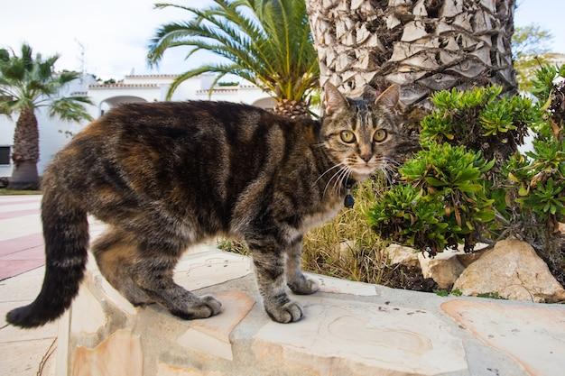 애완 동물 및 가축 개념-거리에서 걷고 칼라 입고 귀여운 고양이