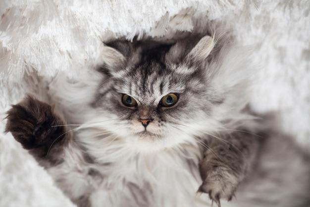 Домашние животные кошки красивый мех животных