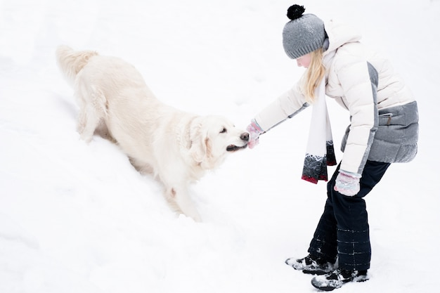 Pets in nature - a beautiful golden retriever plays with the owner with a stick in a winter snow-covered forest