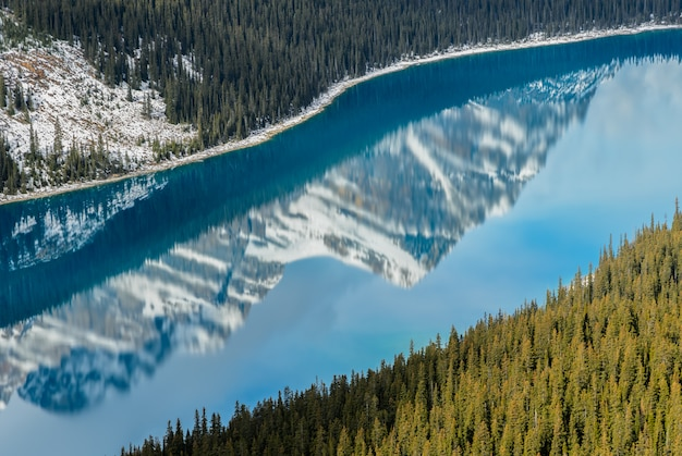 アルバータ、カナダのカナディアンロッキーマウンテンの反射と鮮やかなブルーpeyto湖