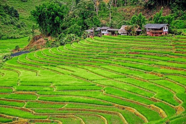 Pha mon bamboo pink house