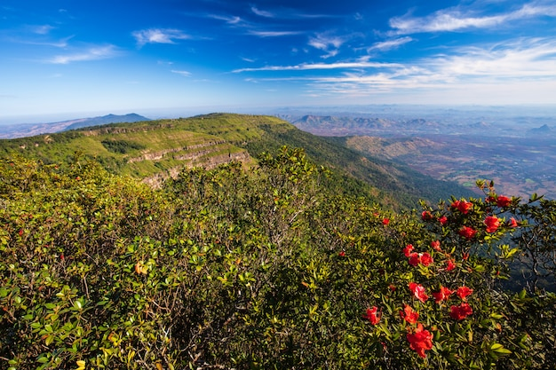 Pha-ta lern、phu luang野生生物保護区、ルーイ県タイの風景。