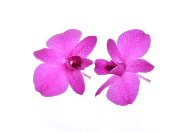 고립 된 phalaenopsis 난초 꽃