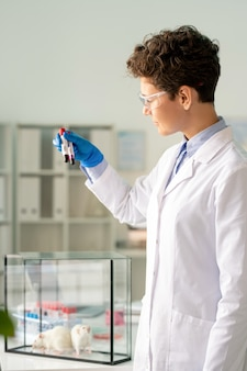 Pharmaceutical scientist in lab coat studying coronavirus infection preparing infected blood for experimenting on rats