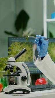 유전적 돌연변이를 관찰하는 유기농 잎 샘플을 보고 있는 제약 여성. 미생물학 과학 실험실에서 유기 농업 식물을 검사하는 화학자 과학자