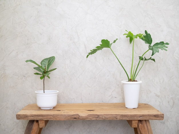 Philodendron selloum and ficus elastica burgundy botanical tropical house plant in modern white pot on grunge wood table