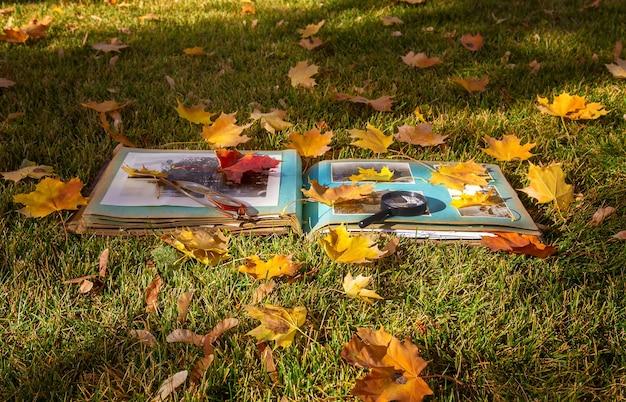 公園の紅葉の写真集。