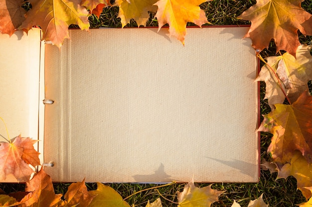 Photo album with autumn yellow leaves in the park.