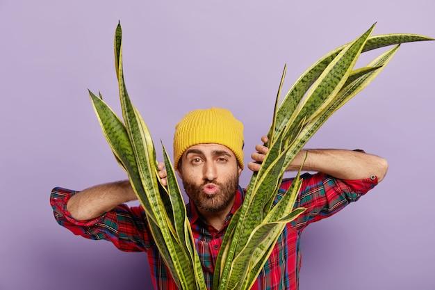 La foto del giardiniere dilettante guarda attraverso le foglie della pianta del serpente, tiene le labbra piegate, vuole baciare qualcuno, si prende cura della pianta d'appartamento, indossa un cappello giallo e una camicia casual. cura delle piante e concetto di natura