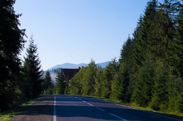 Photo asphalt road in the forest