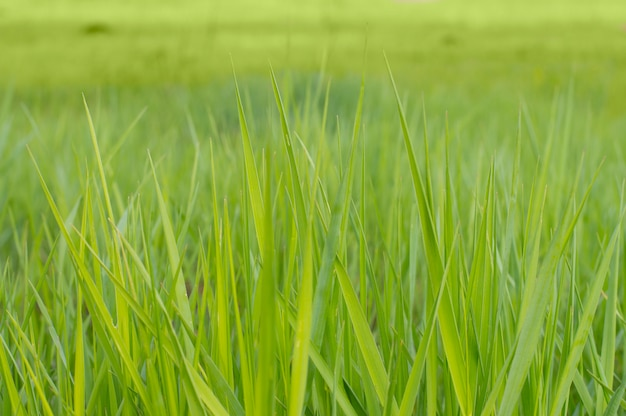 Photo background texture green grass