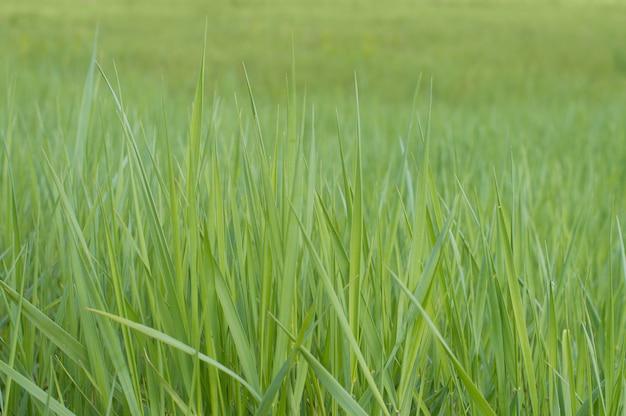 写真背景テクスチャ緑の草