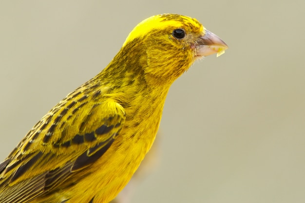 Photo of a bird of colors yellow