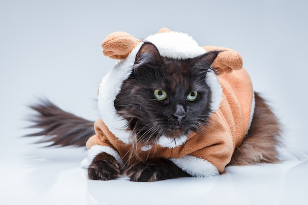 Photo of black cat in deer suit on empty gray surface