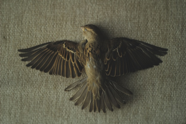 A photo of a dead sparrow
