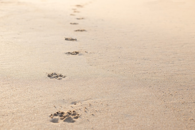 Photo of dog (animal) footprint on the tropical beach