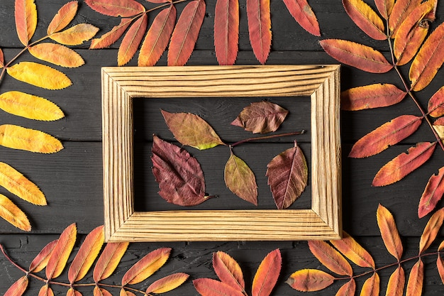 Photo frame and colorful autumn leaves