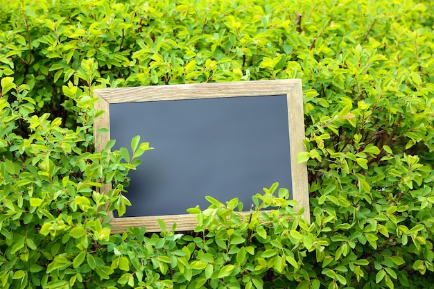 Photo frame over green bush surface