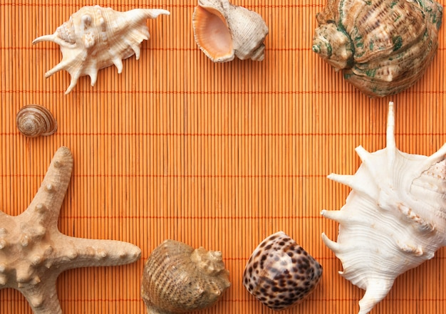 Photo frame of mats and sea shells