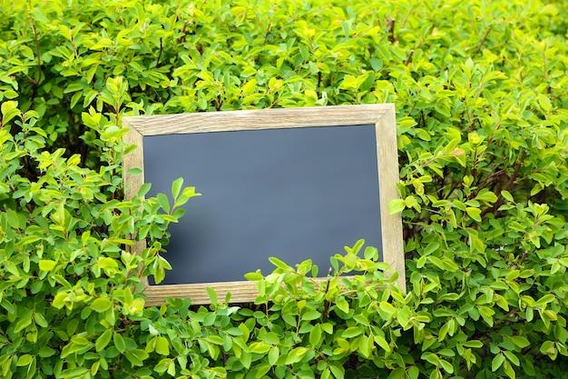 緑の茂みの表面上のフォトフレーム