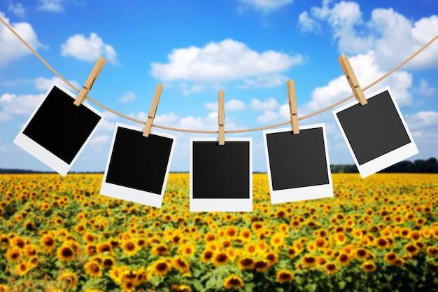 해바라기 밭 앞의 clothespins와 사진 프레임. 3d 렌더링.